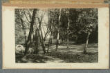 [Collotype illustrations from photographs of scenery in Parks and tree-lined avenues]