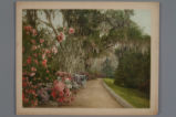 [Garden path with Spanish moss]