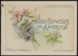 Wild flowers of America : flowers of every state in the American Union. Vol. 1., No. 06