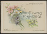 Wild flowers of America : flowers of every state in the American Union. Vol. 1., No. 07