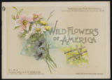 Wild flowers of America : flowers of every state in the American Union. Vol. 1., No. 09