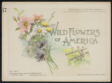 Wild flowers of America : flowers of every state in the American Union. Vol. 1., No. 17